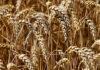 Co ma znaczenie przy decydowaniu się na wyroby do ochrony zbóż